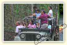 Jungle Safari in open jeep